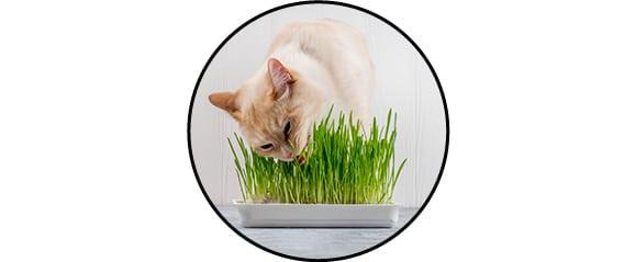 Bac d'herbe à chat fleuriste