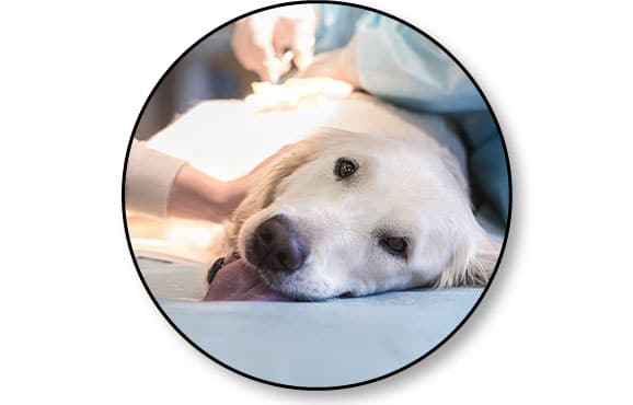Combien de temps peut vivre un chien avec une tumeur