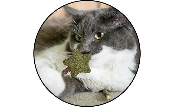 Jouet à l'herbe à chat cataire et matatabi