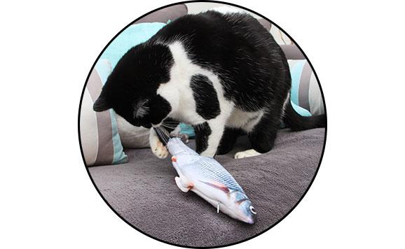 Jouet poisson qui bouge la queue avec herbe à chat cataire