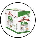 royal-chien-mini