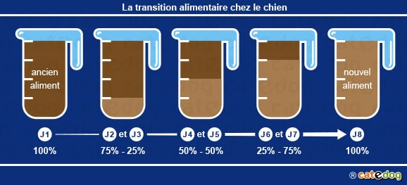 transition-alimentaire-tails-croquettes