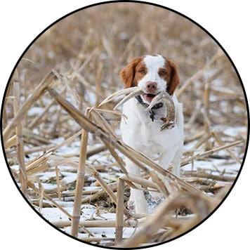 Bois de cerf pour chien